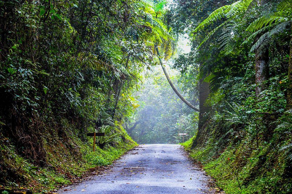 Trilha do Núcleo Pedra Grande do Parque Estadual da Cantareira